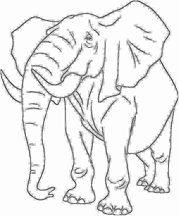 Elefante el animal más grande de la selva